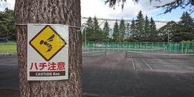【お知らせ】新井総合公園・テニスコート「ハチの巣」発見につき使用禁止!!